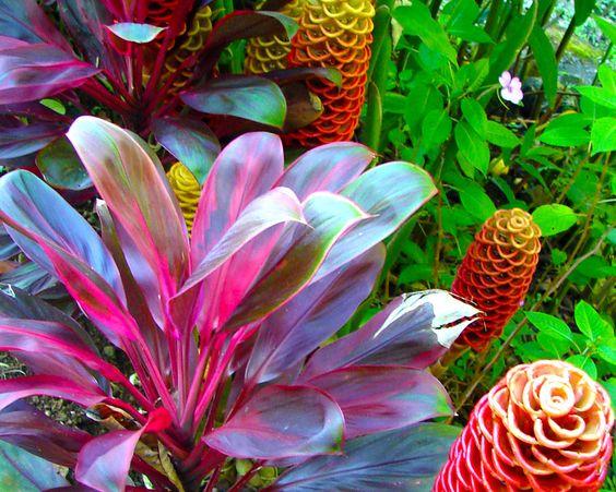 Florida Tropical Plants Central Florida Tropical Landscaping